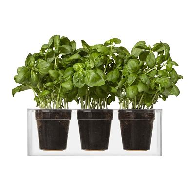 clear-cube-planter-3_opt