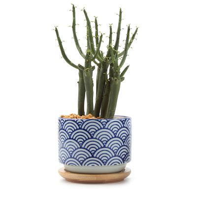 japanese-succulent-planter_opt