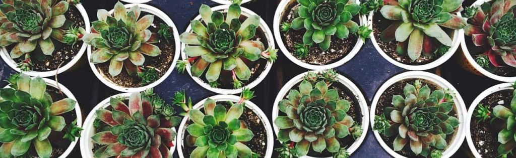 indoor plants and pots collection